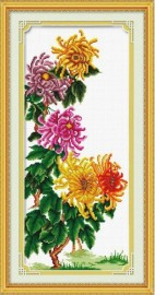 Хризантемы (Chrysanthemum)